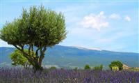 Réhabilitation du sommet du Mont Ventoux